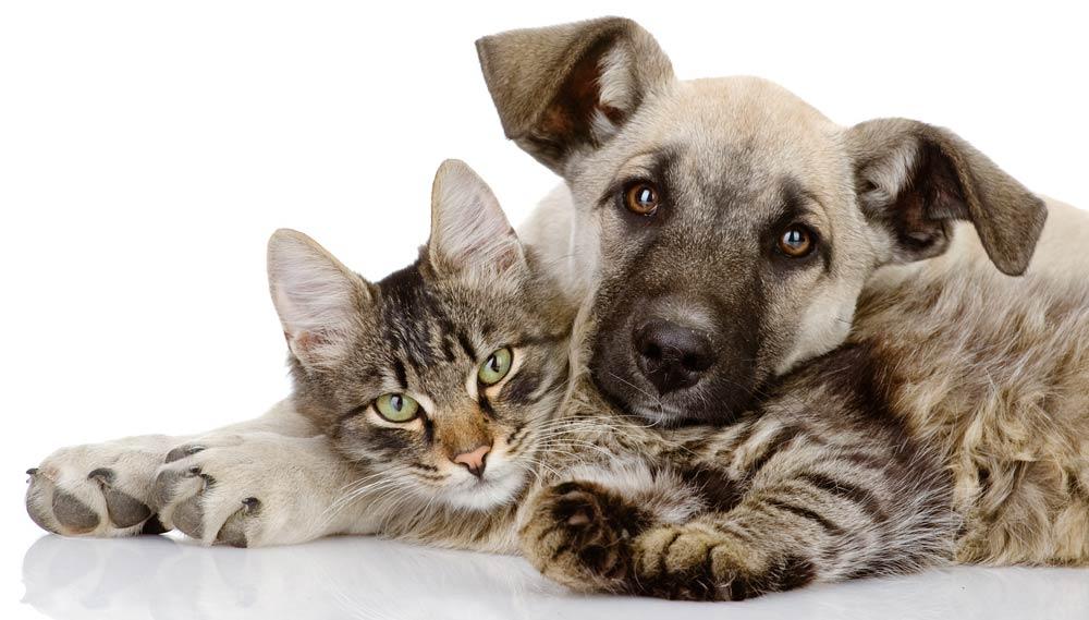 il dolore nel cane e nel gatto